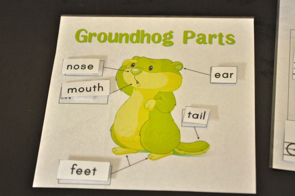 Groundhog body parts